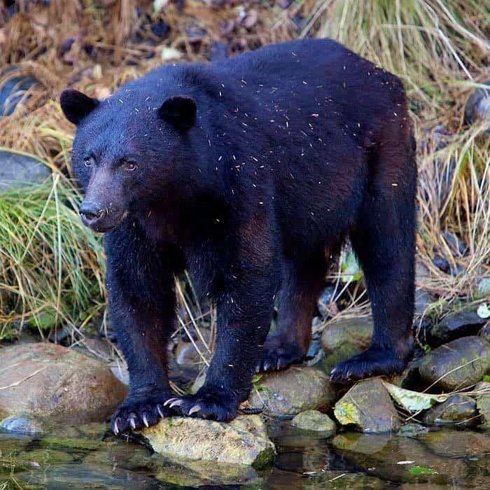 photo bear 2